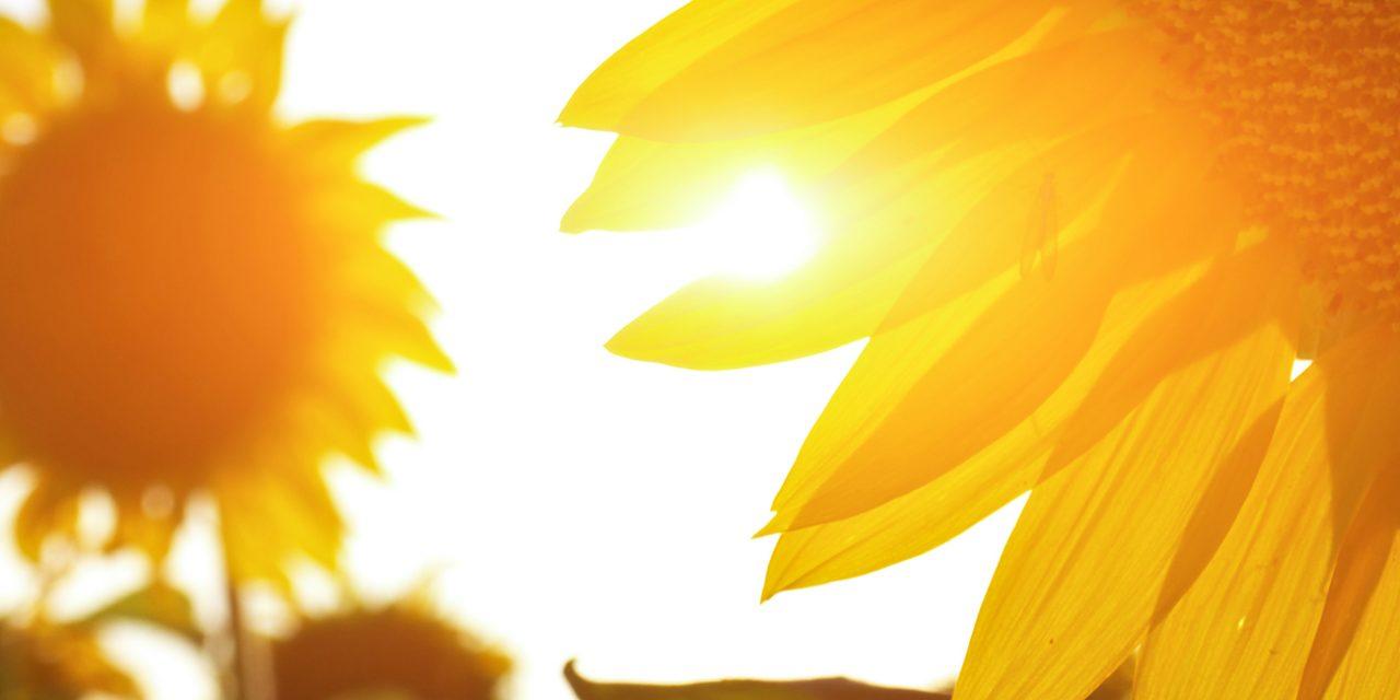 Bezpečnost vysokých dávek vitaminu D potvrzena