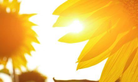 Vliv vitaminu D na emoce, chování a pozornost u dětí