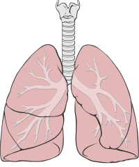 Nedostatek vitaminu D je spojen s chronickými chorobami plic