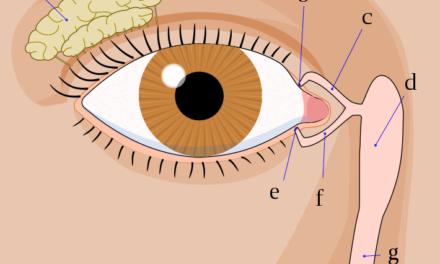 Pacienti trpící syndromem suchého oka mají nedostatek vitaminu D